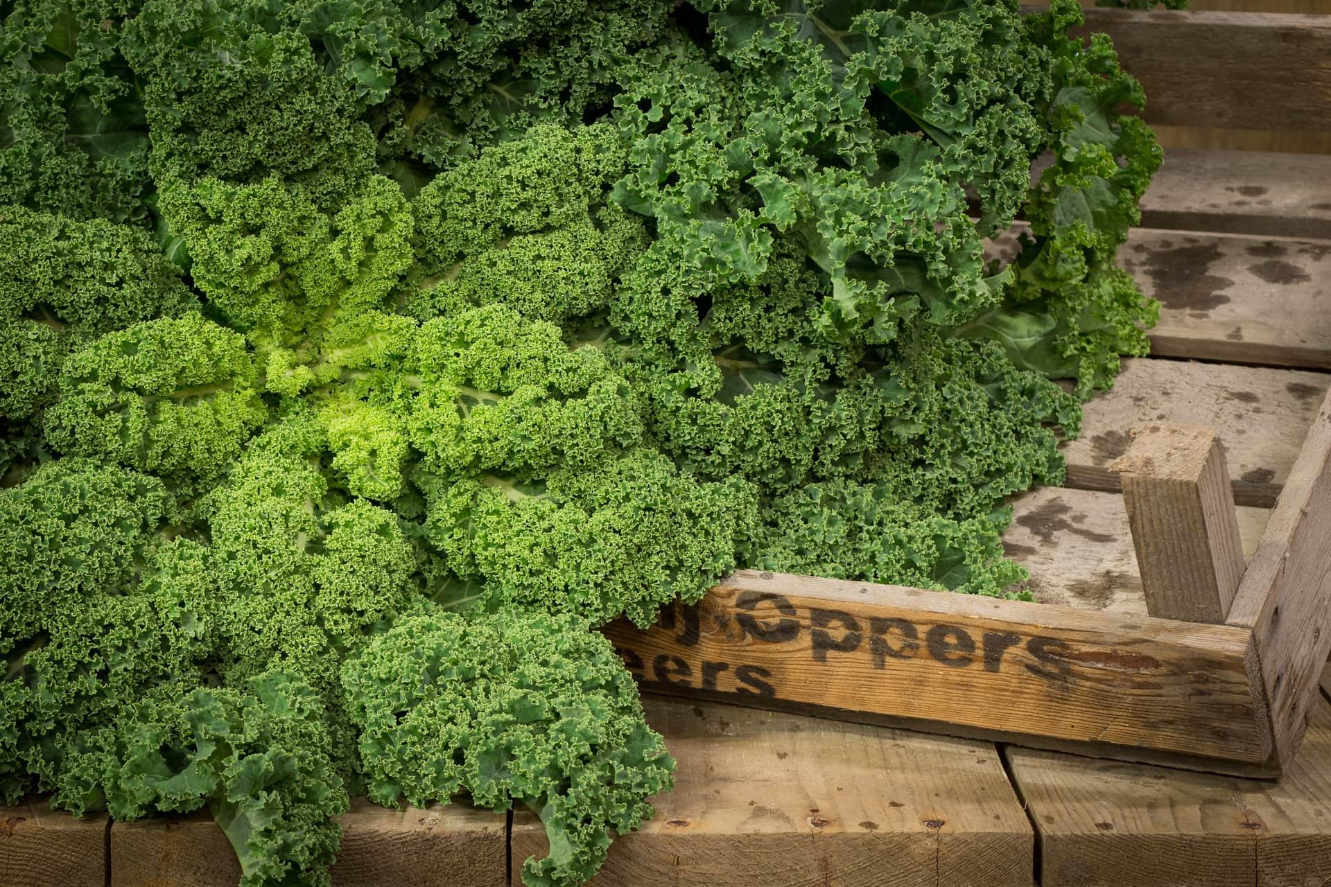 Bedrijfsreportage - Groentekwekerij Oppers, Middelbeers