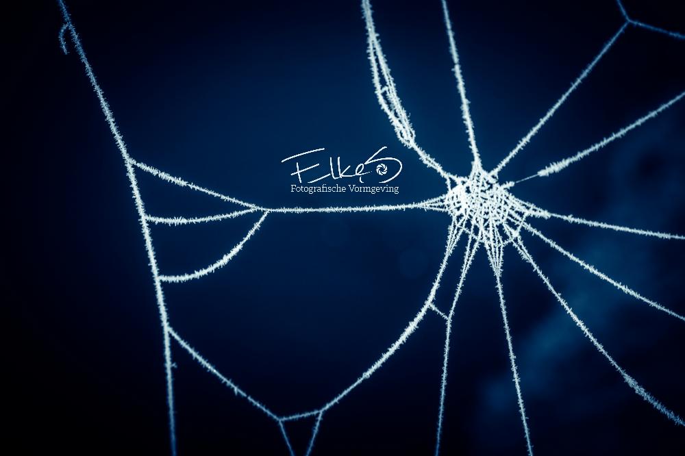 Spinnenweb met rijp